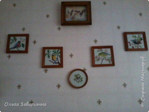 Коллекция птиц. фото 6