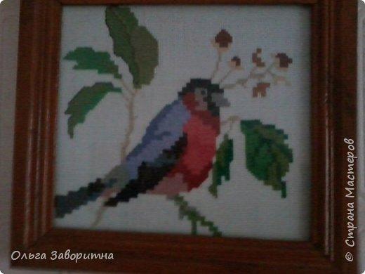 Коллекция птиц. фото 5