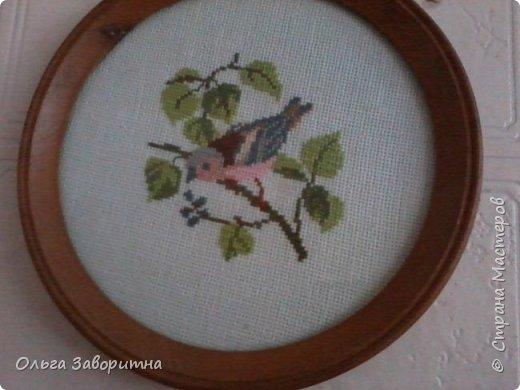 Коллекция птиц. фото 3