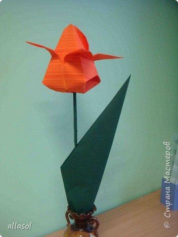 """Эти тюльпаны (коробочки для тюльпана) делала по книге С.Соколовой """"Бумажные цветы, букеты, кусудамы.""""  фото 5"""