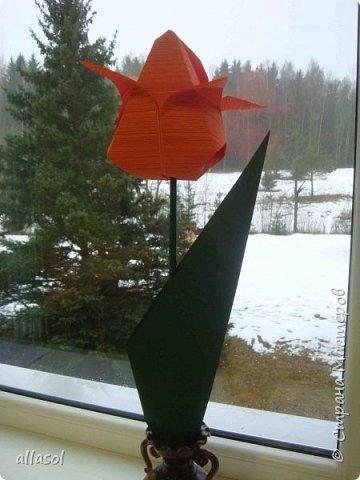 """Эти тюльпаны (коробочки для тюльпана) делала по книге С.Соколовой """"Бумажные цветы, букеты, кусудамы.""""  фото 4"""