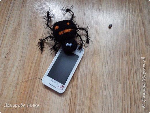 паук и мартовские коты фото 1