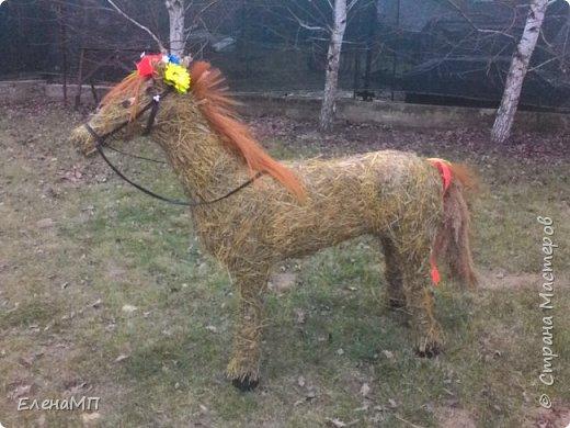 Моя первая лошадка:-)