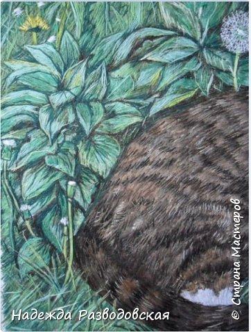 Наконец-то вышила  гладью еще одного кота. Как всегда  для  своей вышивки использовала синтетическую нить. фото 23