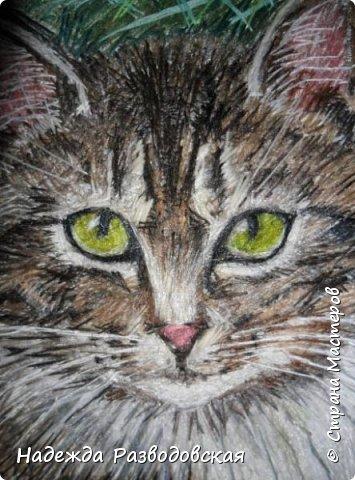 Наконец-то вышила  гладью еще одного кота. Как всегда  для  своей вышивки использовала синтетическую нить. фото 21