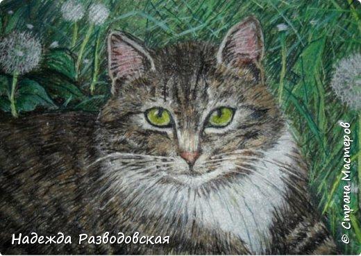 Наконец-то вышила  гладью еще одного кота. Как всегда  для  своей вышивки использовала синтетическую нить. фото 22