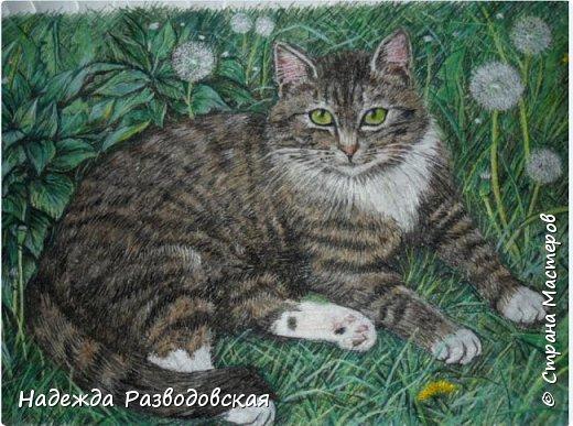 Наконец-то вышила  гладью еще одного кота. Как всегда  для  своей вышивки использовала синтетическую нить. фото 24