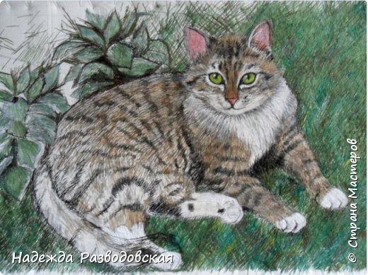 Наконец-то вышила  гладью еще одного кота. Как всегда  для  своей вышивки использовала синтетическую нить. фото 14