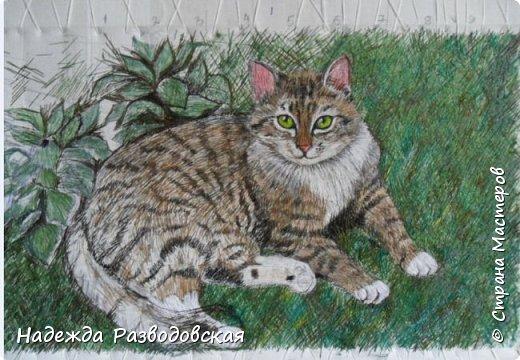 Наконец-то вышила  гладью еще одного кота. Как всегда  для  своей вышивки использовала синтетическую нить. фото 15
