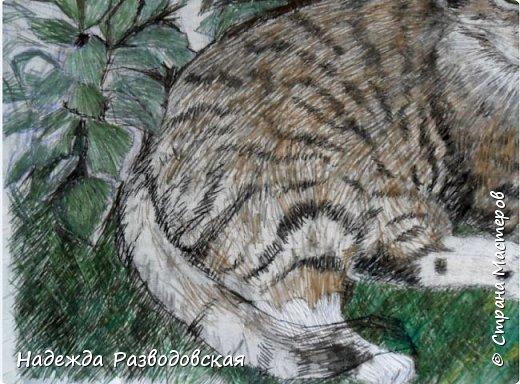 Наконец-то вышила  гладью еще одного кота. Как всегда  для  своей вышивки использовала синтетическую нить. фото 13