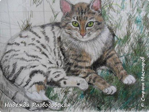 Наконец-то вышила  гладью еще одного кота. Как всегда  для  своей вышивки использовала синтетическую нить. фото 12