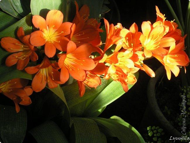 """Сейчас в фондовой оранжерее Главного Ботанического сада г. Москвы представлена выставка орхидей, камелий """"Поэзия Цветов"""" и экспозиция цветущих азалий! Спешите, ежедневно с 11 до 18, дарите себе праздник цветов! фото 16"""
