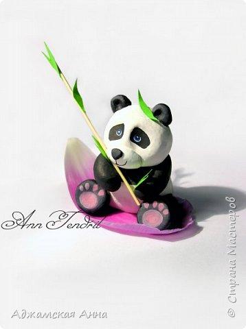 панда) фото 1
