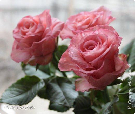 Девочки,и опять я с розами) Надеюсь,вы еще от них не устали.Я,например,уже немного устала,но мои заказы идут в такой последовательности: розы,розы,розы,какие-то другие цветы или композиция и снова розы,розы....Нет,вы не подумайте,я не жалуюсь) Значит буду набирать опыт и навыки на розах) Желаю приятного просмотра) фото 11