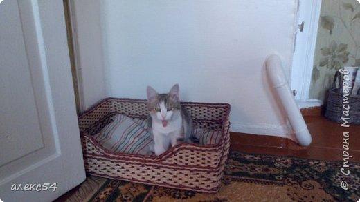 """Весенний привет Мастерицам СМ! Наплелось кое-что ,  пока нет  весенних работ , выкладываю свои """"шедевры"""". Короб для  котика, Кеши, размер 49 на 58 фото 2"""