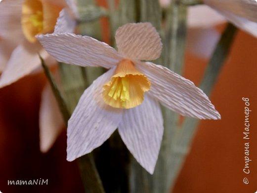 Нарциссы из гофрированной бумаги фото 2
