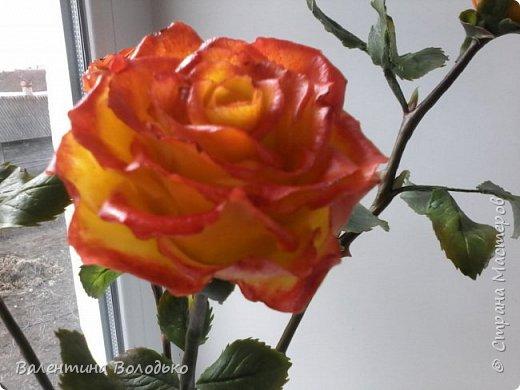 Добрый день уважаемые мастера и мастерицы Страны Мастеров!!Очередные розы,на сей раз двухцветные!!! фото 4
