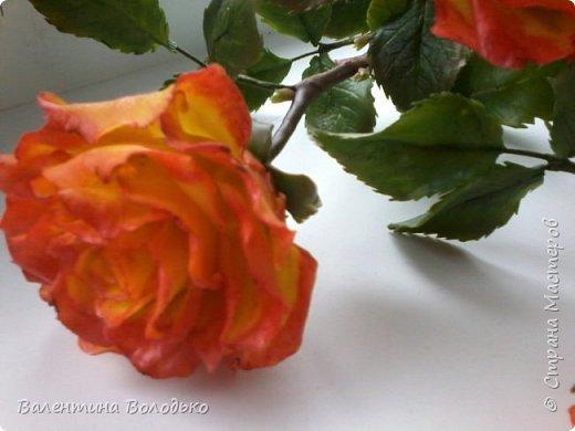 Добрый день уважаемые мастера и мастерицы Страны Мастеров!!Очередные розы,на сей раз двухцветные!!! фото 6
