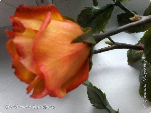 Добрый день уважаемые мастера и мастерицы Страны Мастеров!!Очередные розы,на сей раз двухцветные!!! фото 9