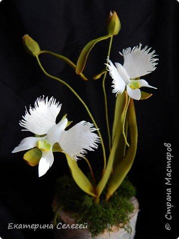 """орхидея """"белая цапля"""" из фоамирана фото 3"""