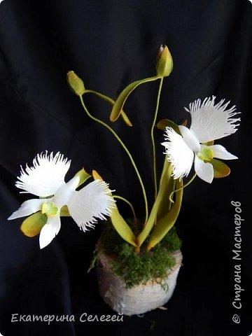 """орхидея """"белая цапля"""" из фоамирана фото 5"""
