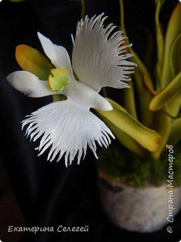"""орхидея """"белая цапля"""" из фоамирана фото 2"""