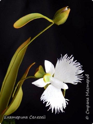 """орхидея """"белая цапля"""" из фоамирана фото 1"""