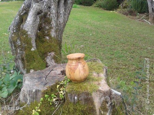 горшочек-ваза : оливковое дерево, высота:12см, обработано оливковым маслом фото 2