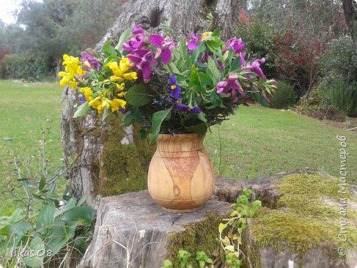горшочек-ваза : оливковое дерево, высота:12см, обработано оливковым маслом фото 1