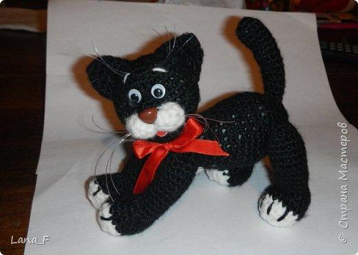 Черный кот фото 2