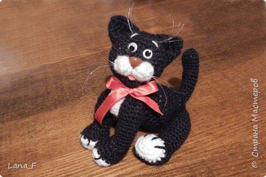 Черный кот фото 1