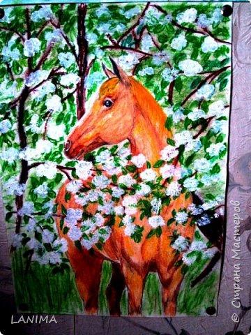 один из моих коней, у него теперь уже другие хозяева но пусть у меня он тоже будет,хотя бы нарисованный.