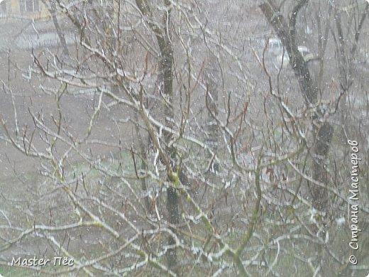 Всем привет! Сегодня у нас выпал снег прямо на траву. Резкое похолодание в марте, как-то странно! Даже Матильде стало интересно. фото 2