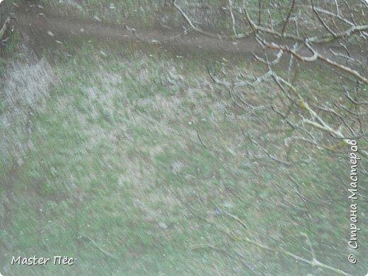 Всем привет! Сегодня у нас выпал снег прямо на траву. Резкое похолодание в марте, как-то странно! Даже Матильде стало интересно. фото 3