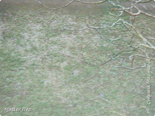 Всем привет! Сегодня у нас выпал снег прямо на траву. Резкое похолодание в марте, как-то странно! Даже Матильде стало интересно. фото 4