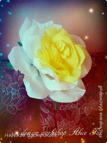 гигантская напольная роза фото 2