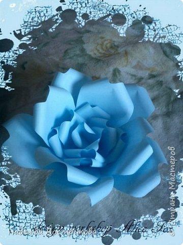 гигантская напольная роза фото 1