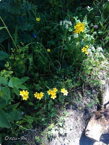Уже запахло весной и хочется хорошего настроения и больше цвета. Ето моя, так сказать, синяя роза. фото 5