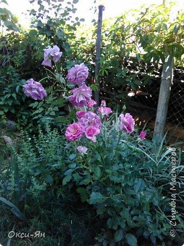 Уже запахло весной и хочется хорошего настроения и больше цвета. Ето моя, так сказать, синяя роза. фото 2