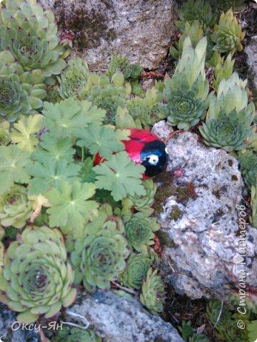 Уже запахло весной и хочется хорошего настроения и больше цвета. Ето моя, так сказать, синяя роза. фото 6