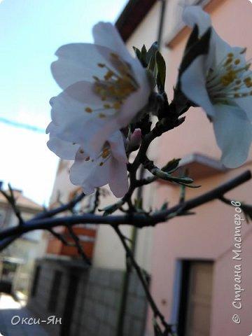 Уже запахло весной и хочется хорошего настроения и больше цвета. Ето моя, так сказать, синяя роза. фото 9