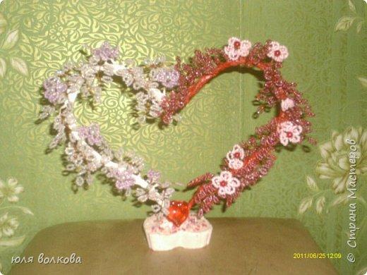 мои розы! фото 3