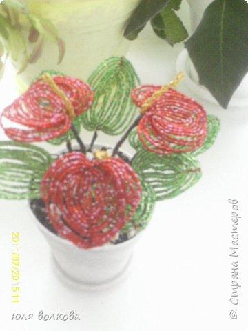 мои розы! фото 5