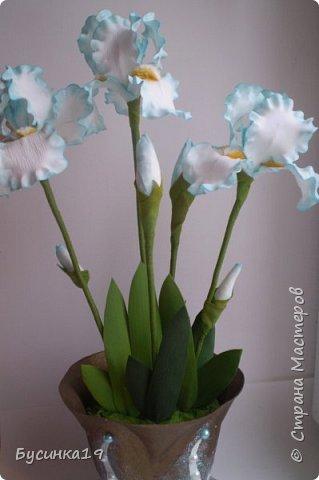 Голубые ирисы фото 2