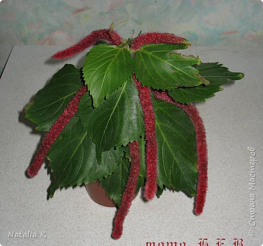 Вот такой цветочек у меня вырос ))) фото 4