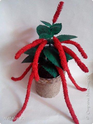 Вот такой цветочек у меня вырос ))) фото 2