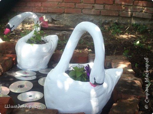 лебеди садовые фото 3