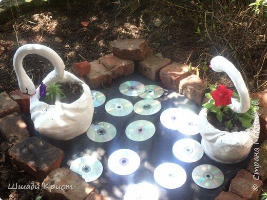 лебеди садовые фото 4