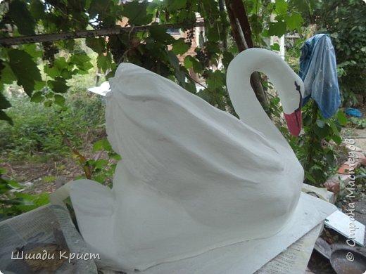 лебеди садовые фото 2