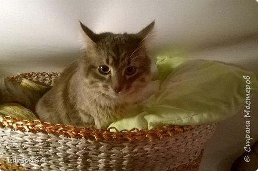 Добрый день дорогие рукодельницы и любители животных. Вот и у моего кота появился свой дом. фото 26